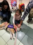 therapy dog at airport, az dog sports, julie brewer, therapy dog