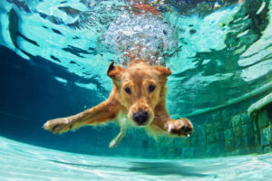 dog swim, az dog sports. dog swimming lessons