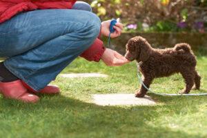 clicker training, az dog sports, kwanho song, dog training phoenix