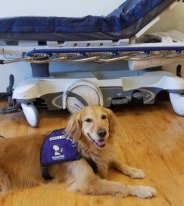 therapy dogs, julie brewer, az dog sports