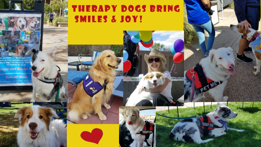 therapy dogs, julie brewer, az dog sports