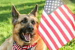 training your own service dog, az dog sports, service animal, veterans