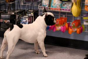 dog toys, dog collar, dog leash, dog retail, az dog sports