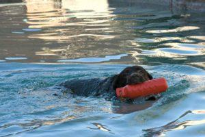 dog swim, dog swim lessons, dog water toys, az dog sports