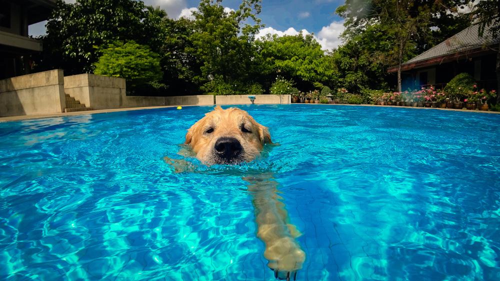 dog swimming lessons, az dog sports, dog training arizona