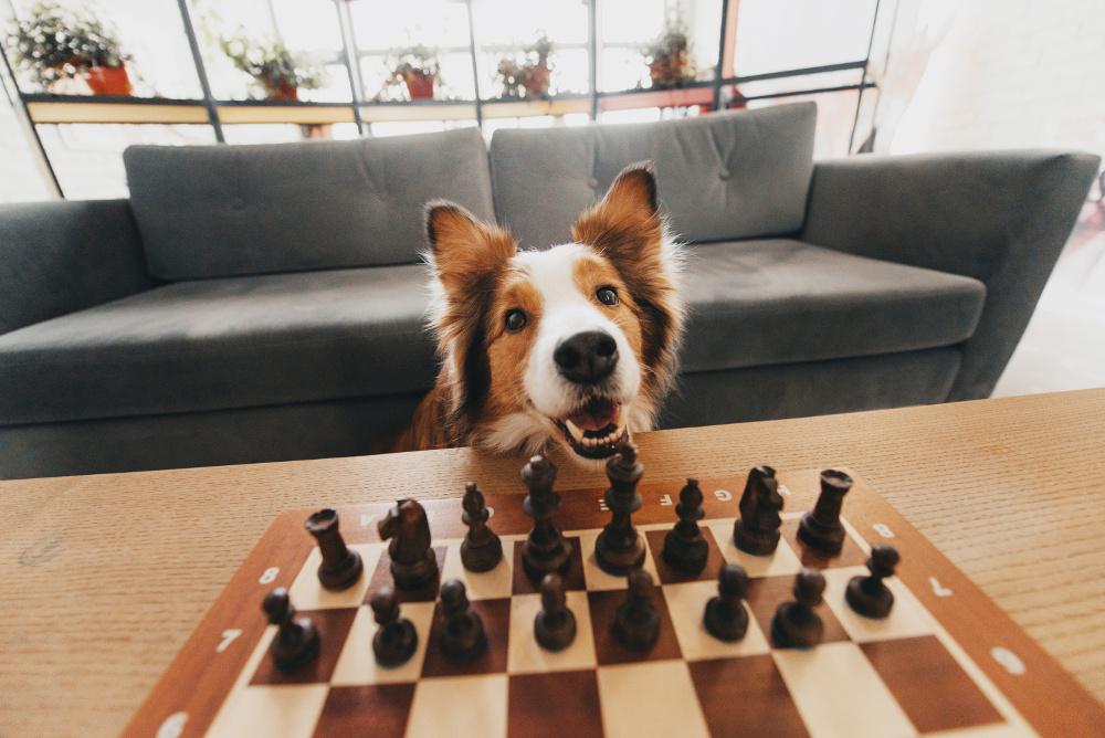 bored dog, dog games, az dog sports
