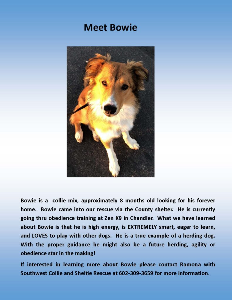 adopt dog, dog trainer