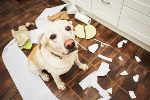 dog training phoenix, dog behavior training